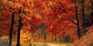 activités à faire dehors en automne
